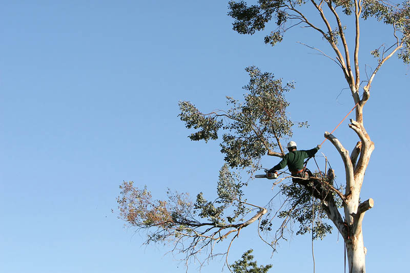 tree removal Northridge